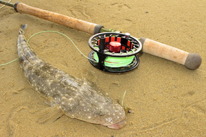 dusky flathead on fly sitting on sand