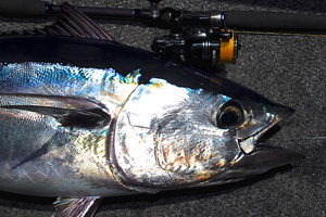 southern bluefin tuna fishing rod
