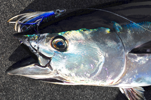 lures for targeting tuna