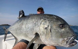 rock wyrsta huge giant trevally