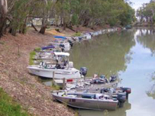 Balranald-Murrumbidgee-Fishing-Classic_220x165