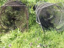 Illegal eel traps, australia, nsw fisheries