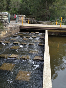Lane Cove Weir fishway