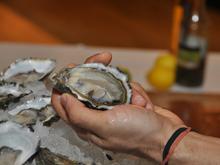 australian seafood, chefs, curtin university