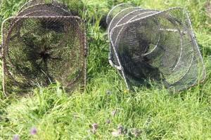 illegal eel traps
