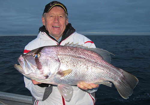 wa west australian dhufish