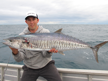 spanish mackerel fishing australia