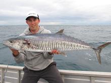 spanish mackerel fishing australia