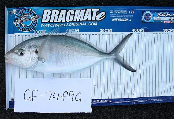 Rules | Australia Fishing Tournaments | Get Fishing