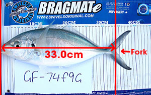 how to measure fish fork length for fishing competition tournament