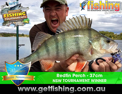 redfin-perch-jason-naumann-37cm