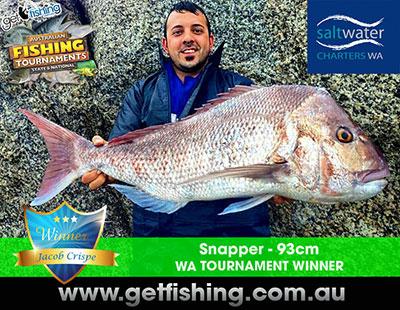 snapper-jacob-crispe-93cm