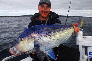 Matt-Baird-Queen-Snapper-Blue-Morwong-300x200