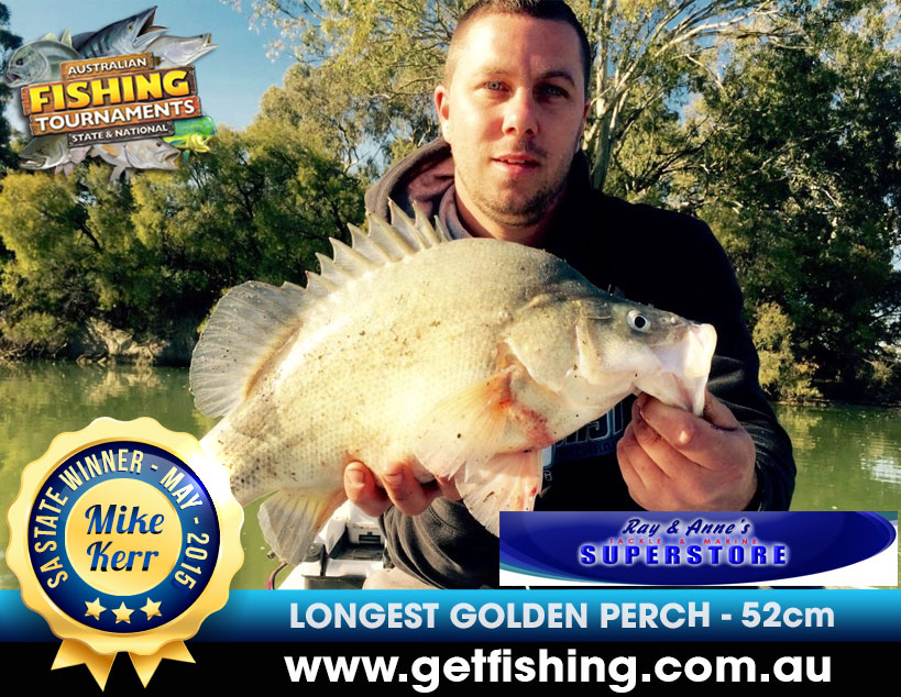 golden-perch-mike-kerr-52cm