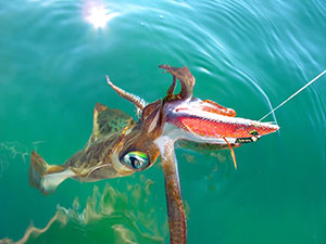 squid in water with yamashita jig