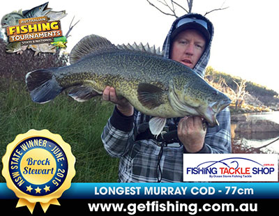 murray-cod_brock-stewart_77cm-(1)