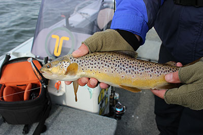 how to catch trout on soft plastics lures