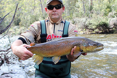 brown trout caught in tasmania australia