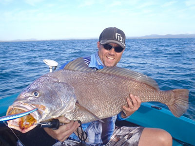 black jewfish on lure liam pascoe