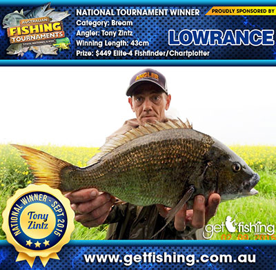 bream_tony-zintz_43cm
