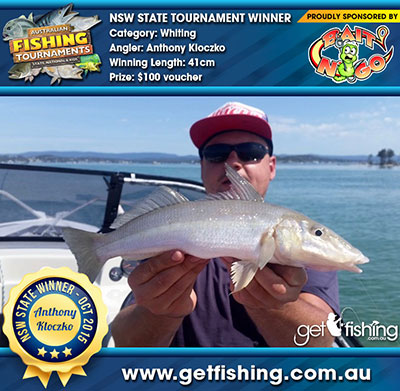 whiting-anthony-kloczko_41cm
