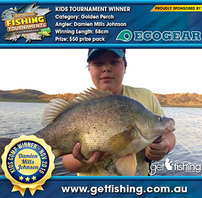 golden-perch_damien-mills-johnson_58cm