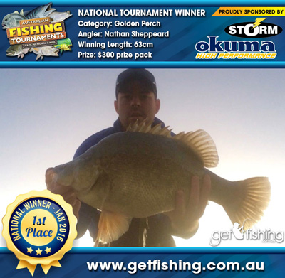 golden-perch_Nathan-Sheppeard_63cm