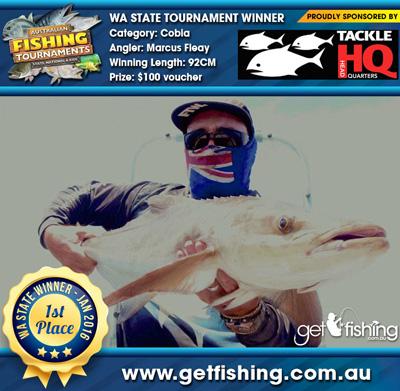 kingfish_cobia_marcus-fleay_92cm