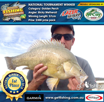 Golden-Perch_ricky-wetherall_57cm