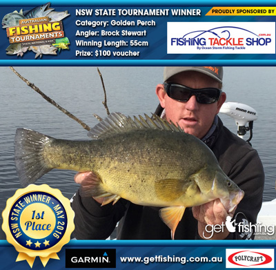golden-perch_brock-stewart_55cm