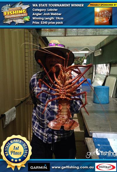 Lobster-19cm-Josh-Webber
