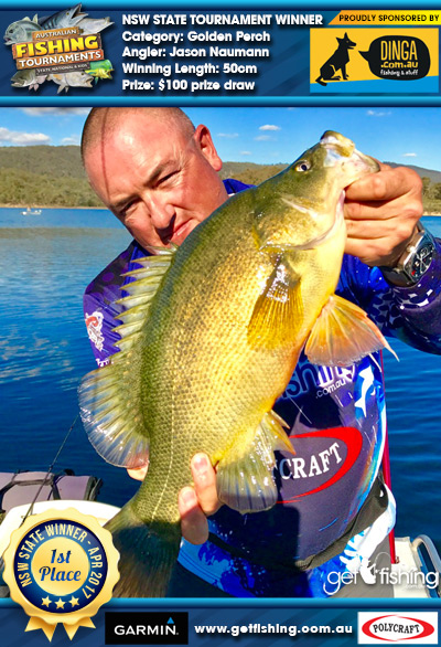 Golden Perch 50cm Jason Naumann Dinga Fishing $100 prize draw