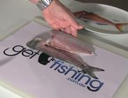 fillet australian herring