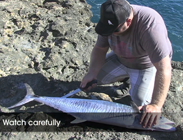 how to fillet spanish mackerel video