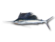How To Target Sailfish