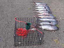 southern bluefin tuna siezed, portland vic
