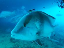 SS Yongala Dive fishing fish