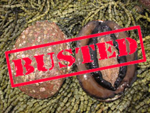 Midnight-Abalone-Bust-Catches-Poachers-in-Victoria