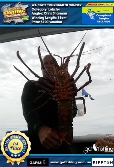 Lobster 15cm Chris Sharman Compleat Angler Nedlands $100 voucher