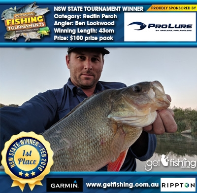 Redfin Perch 43cm Ben Lockwood Pro Lure Australia $100 prize pack