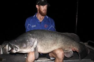 Ty Edmonds - Murray Cod @ 130cm
