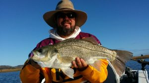 Tony Schultz - Bass/Estuary Perch @ 53cm